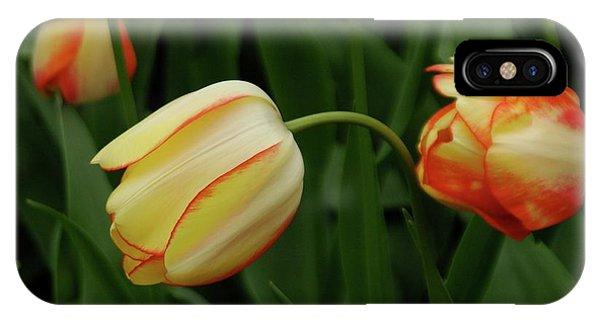 Nodding Tulips IPhone Case