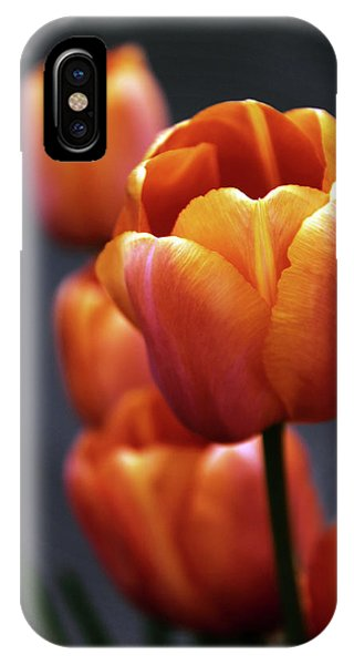 Golden Gardens iPhone Case - Tulips Aglow by Jessica Jenney