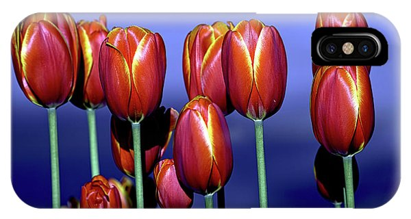 Tulips At Attention IPhone Case