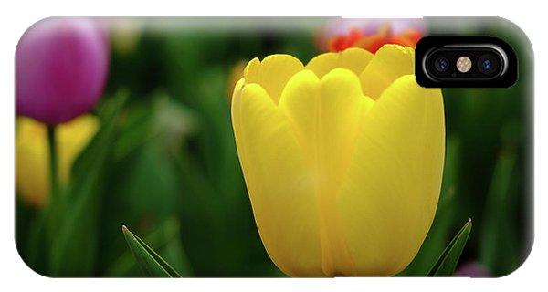 Tulips At Campus IPhone Case