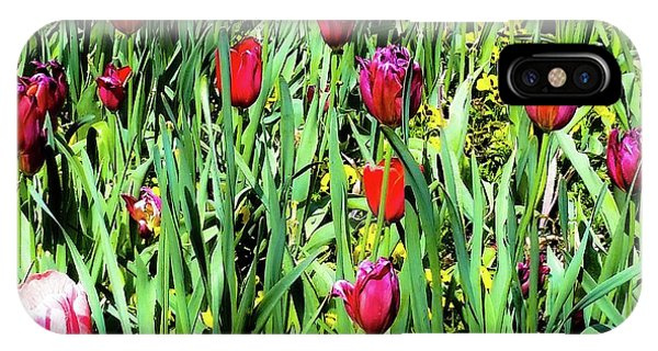 Tulips Blooming IPhone Case