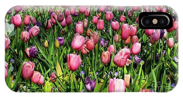 Tulips In Bloom IPhone Case