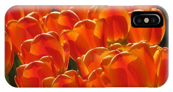 Tulips In Light IPhone Case