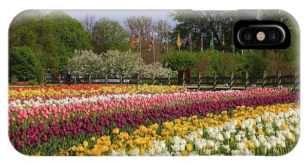 Tulips In Rows IPhone Case