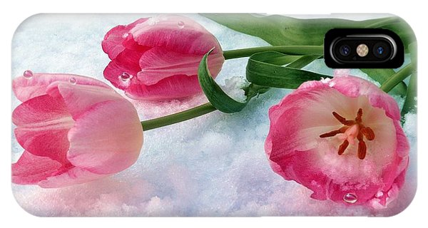 Tulips In Snow IPhone Case