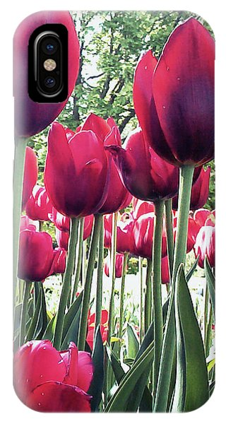 IPhone Case featuring the photograph Tulips by Melinda Blackman
