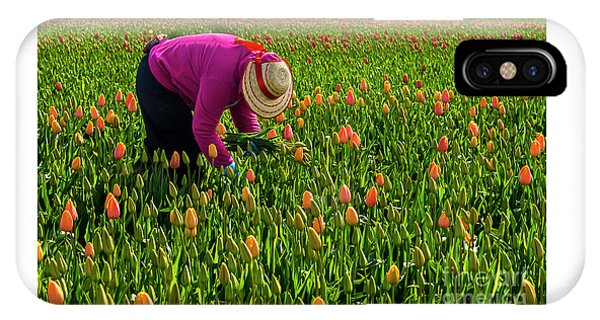 Tulips Picker IPhone Case