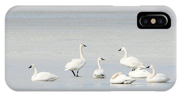 Tundra Swans 1 IPhone Case