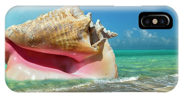 Carribbean iPhone Case -  Conchquered by Betsy Knapp