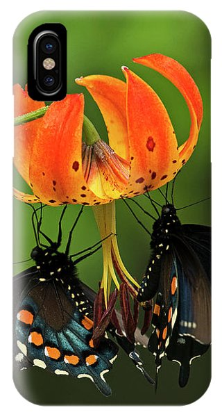 Turks Cap Lilly And Butterflies, Blue Ridge Parkway IPhone Case