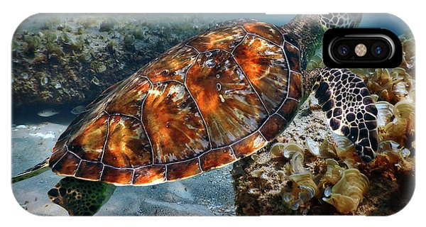 Turtle And Shark Swimming At Ocean Reef Park On Singer Island Florida IPhone Case