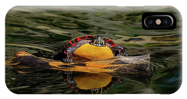 Turtle Taking A Swim IPhone Case