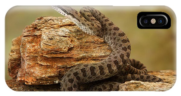 Serpent iPhone Case - Twin-spotted Rattlesnake On Desert Rocks by Susan Schmitz
