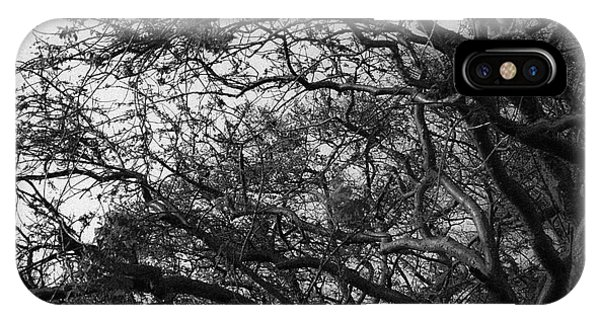 Twirling Branches IPhone Case