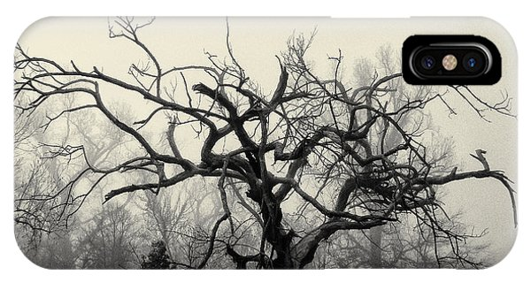 Twisted Tree In Fog IPhone Case