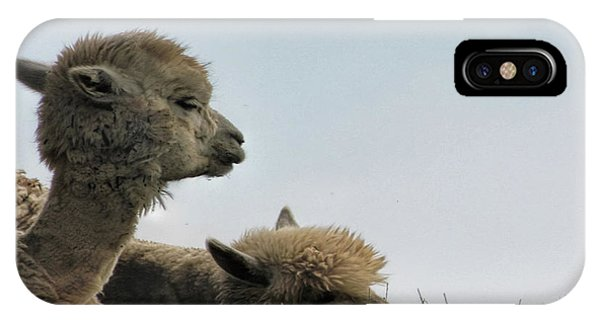 Two Alpaca IPhone Case