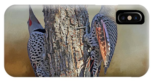 Northern Flicker iPhone Case - Two Flickers by Donna Kennedy