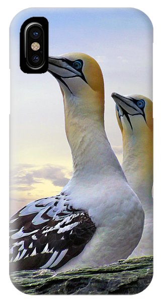Two Gannets IPhone Case