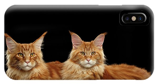 Cat iPhone X Case - Two Ginger Maine Coon Cat On Black by Sergey Taran