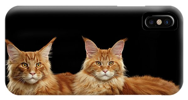 Cat iPhone X / XS Case - Two Ginger Maine Coon Cat On Black by Sergey Taran