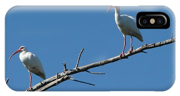 Two Ibis On Perch IPhone Case