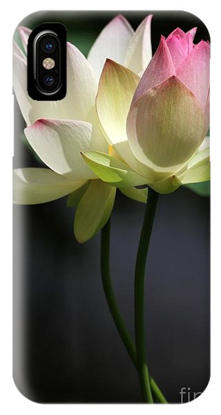 Two Lotus Flowers IPhone Case