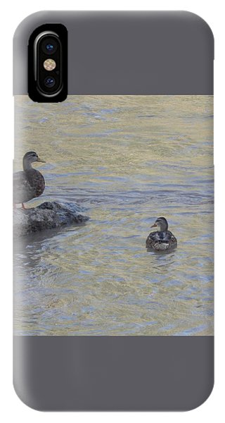 Two Mallard Ducks IPhone Case