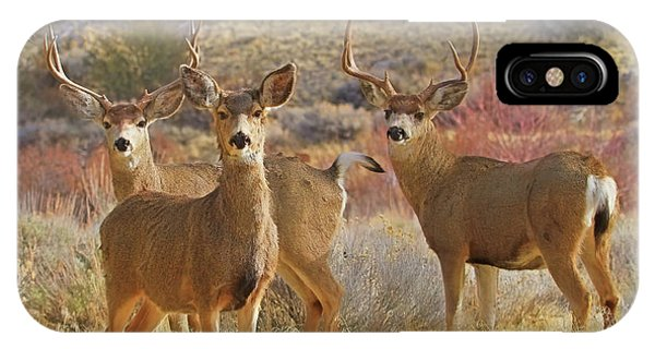 White Tailed Deer iPhone Case - Two Men And A Lady by Donna Kennedy
