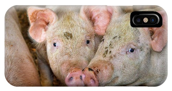 Two Pigs IPhone Case