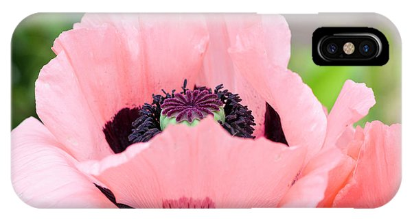 Two Pink Poppies IPhone Case
