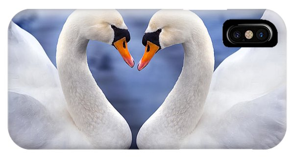 Swan iPhone Case - Two Swans by MGL Meiklejohn Graphics Licensing