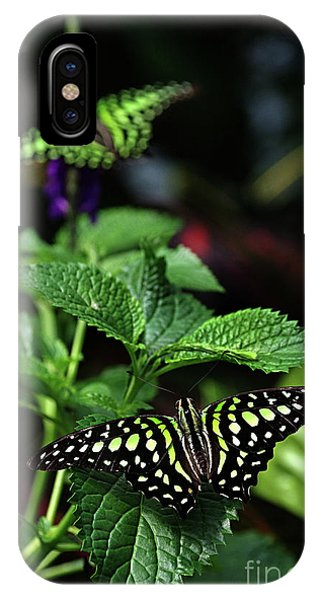 Two Tailed Jay Butterflies- Graphium Agamemnon IPhone Case