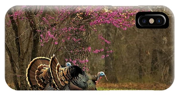 Two Tom Turkey And Redbud Tree IPhone Case