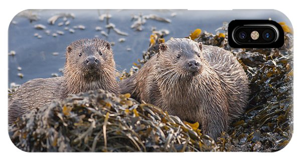Two Young European Otters IPhone Case