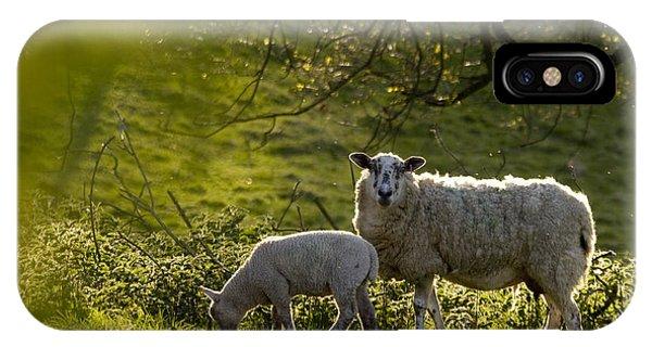 Sheep iPhone X / XS Case - Under The Setting Sun by Angel Ciesniarska