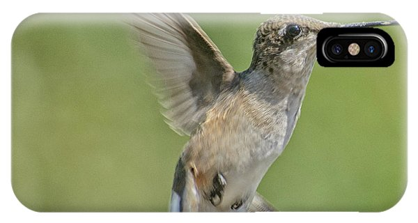 Untitled Hum_bird_four IPhone Case
