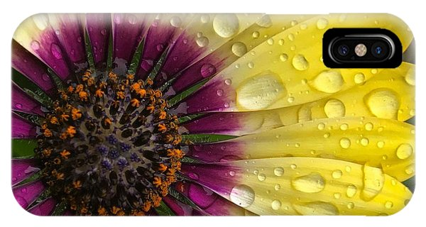 Daisy Up Close  IPhone Case