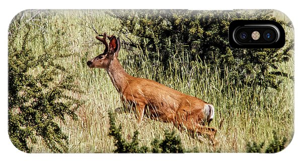 White Tailed Deer iPhone Case - Up The Bank by Robert Bales