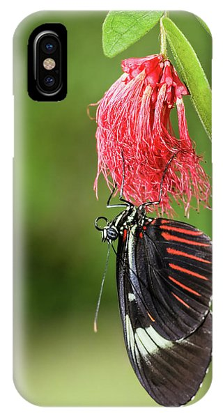 Upon A Red Blossom IPhone Case