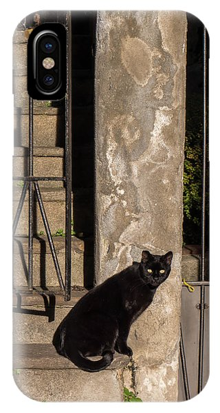 Urban Cat IPhone Case