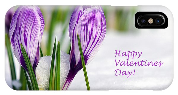 Valentines Day Crocuses IPhone Case