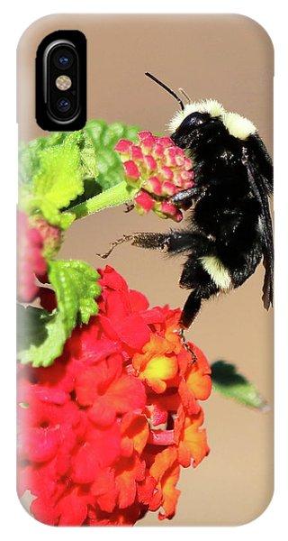Van Dyke Bulmble Bee 11171 IPhone Case
