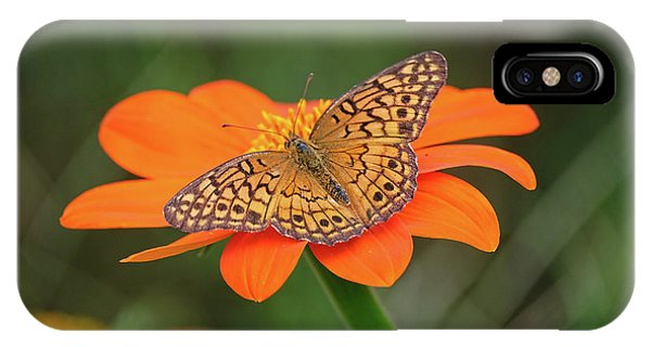 Variegated Fritillary On Flower IPhone Case