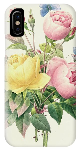 Redoute iPhone Case - Variety Of Yellow Roses And Bengal Roses by Pierre Joseph Redoute