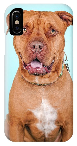 Pitbull iPhone Case - Vasily by Pit Bull Headshots by Headshots Melrose