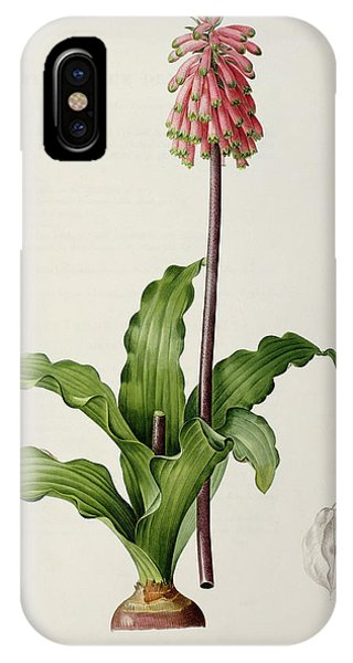 Redoute iPhone Case - Veltheimia Capensis by Pierre Joseph Redoute
