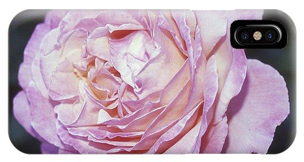 Velvia Rose IPhone Case