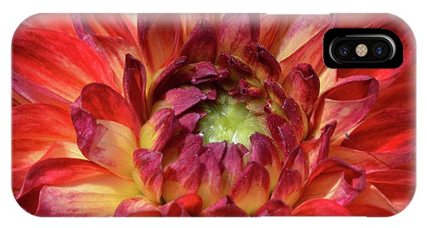 Variegated Dahlia Beauty IPhone Case