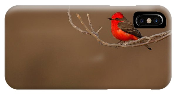 Vermillion Flycatcher On Early Spring Perch IPhone Case