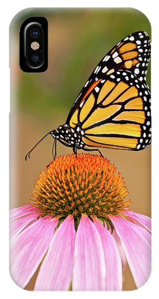 Monarch Butterfly On A Purple Coneflower IPhone Case